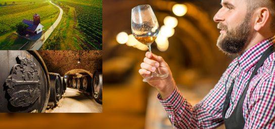 Weinverkostung in den Kleinkarpaten